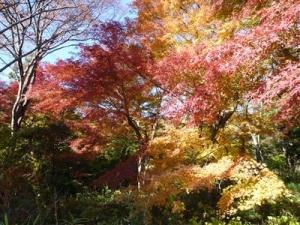 展望台付近の紅葉