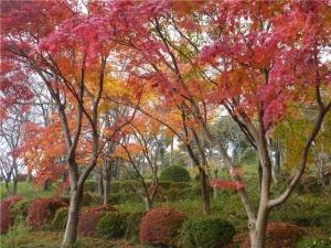 八丁湖公園の紅葉