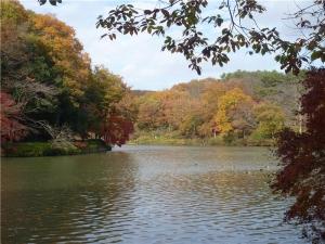 八丁湖の紅葉