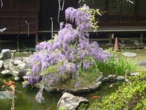 大悲願寺本堂裏の庭園